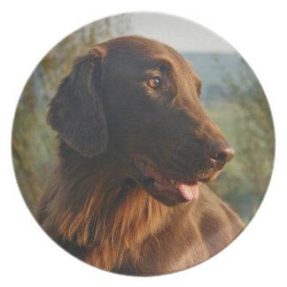 Plato revestido plano de la foto del perro del per