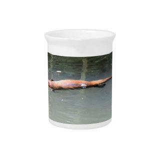 PLATYPUS IN WATER EUNGELLA AUSTRALIA BEVERAGE PITCHERS