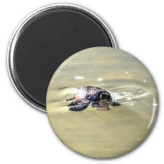 PLATYPUS IN WATER EUNGELLA AUSTRALIA MAGNET