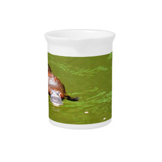 PLATYPUS IN WATER EUNGELLA NATIONAL PARK AUSTRALIA DRINK PITCHER