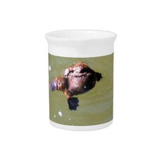 PLATYPUS IN WATER EUNGELLA NATIONAL PARK AUSTRALIA DRINK PITCHERS
