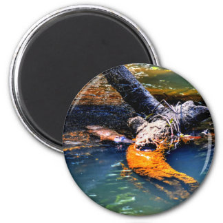 PLATYPUS IN WATER EUNGELLA NATIONAL PARK AUSTRALIA MAGNET