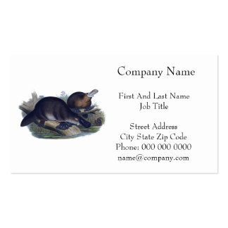 Platypus on a Log Illustration Business Card