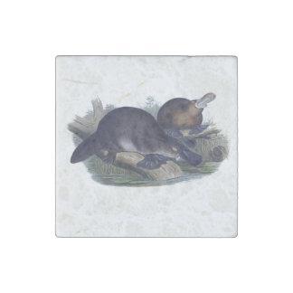 Platypus on a Log Illustration Stone Magnet