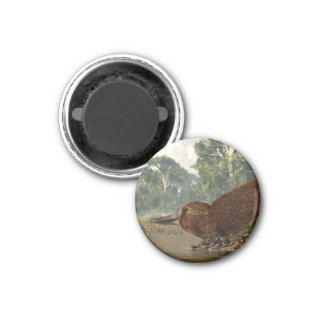 Platypus on the Shore Magnet
