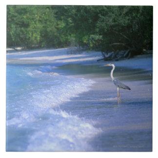 Playa 2 azulejo cuadrado grande