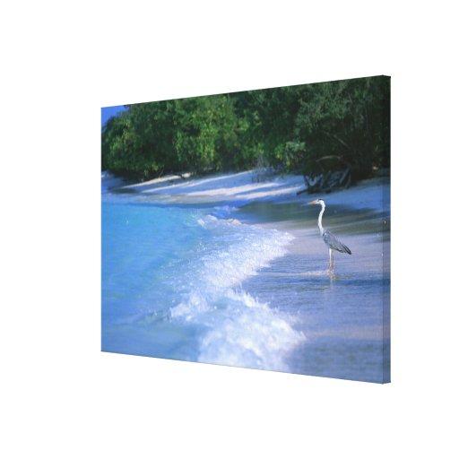 Playa 2 lona envuelta para galerías