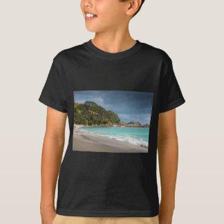Playa arenosa de la franja de los árboles de playeras