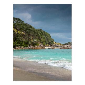 Playa arenosa de la franja de los árboles de postal