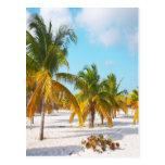 Playa Cayo de Sirena de la palmera largo Postales