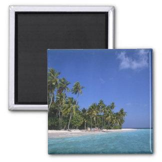 Playa con las palmeras, Maldivas Imán Cuadrado