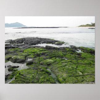 Playa cubierta de musgo póster