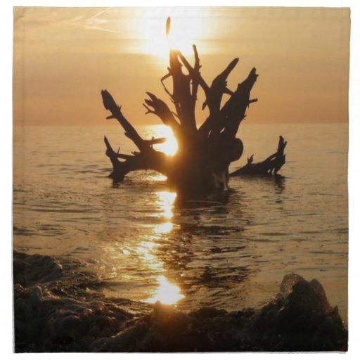 playa de Alnmouth del tronco de árbol del monstruo Servilleta De Papel