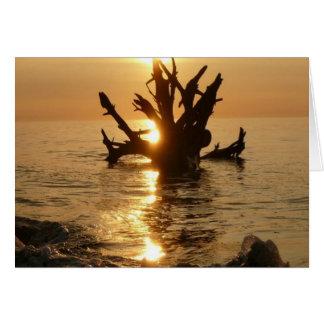 playa de Alnmouth del tronco de árbol del monstruo Tarjeta De Felicitación