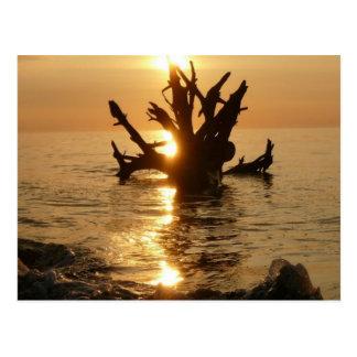 playa de Alnmouth del tronco de árbol del monstruo Tarjetas Postales