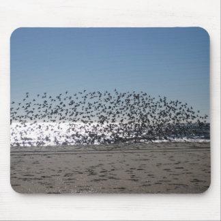 Playa de Atlantic City Tapete De Raton