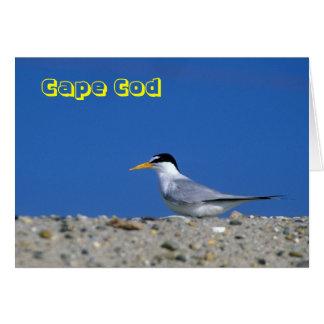 Playa de Cape Cod menos golondrina de mar Tarjeta De Felicitación
