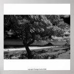Playa de Koki, derechos reservados Clodagh Smith 2 Impresiones