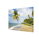 Playa de la arboleda del coco en la bahía de Cades Lona Envuelta Para Galerias