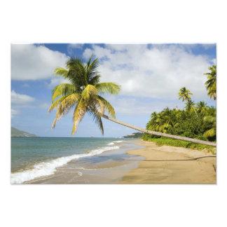 Playa de la arboleda del coco en la bahía de Cades Arte Con Fotos