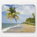 Playa de la arboleda del coco en la bahía de Cades Tapetes De Ratón