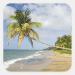 Playa de la arboleda del coco en la bahía de pegatina cuadrada