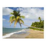 Playa de la arboleda del coco en la bahía de tarjetas postales