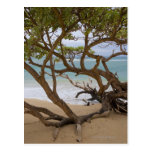 Playa de la bahía de Paia, Maui, Hawaii, los E.E.U Tarjeta Postal