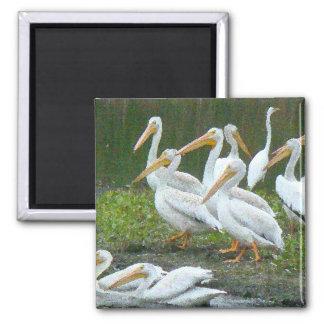 Playa de los animales de la fauna de los pájaros imán cuadrado