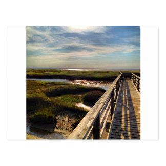 Playa de los grises en Cape Cod Tarjetas Postales