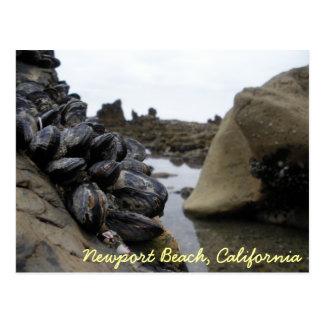 Playa de Newport con marea baja Tarjetas Postales