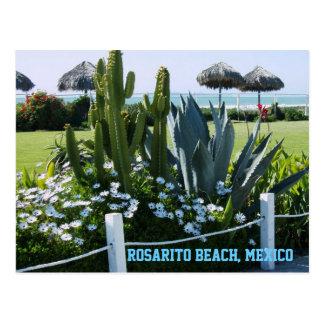 Playa de Rosarito, México (cactus) Tarjeta Postal
