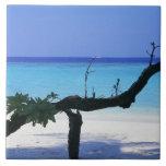 Playa de Sandy 8 Azulejo Cuadrado Grande