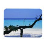 Playa de Sandy 8 Iman De Vinilo