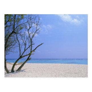 Playa de Sandy 9 Postal