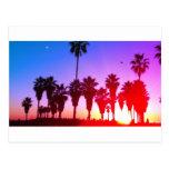 Playa de Venecia de las palmeras Postal