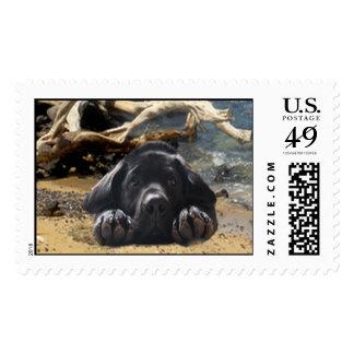 Playa del franqueo del labrador retriever timbres postales