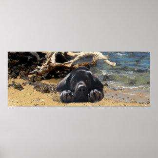 Playa del poster del labrador retriever