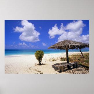 Playa del punto de los Cocos, Barbuda, Antigua Poster