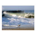 Playa del Rey Surf Birds - Mike Izzo Postcard