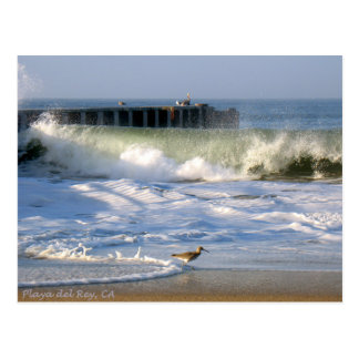 Playa del Rey Surf Birds - Mike Izzo Postcard