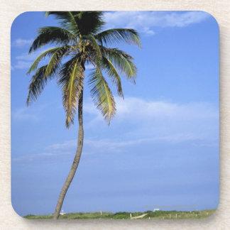 Playa del sur, Miami Beach, la Florida, los Posavasos De Bebidas