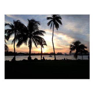 Playa del sur, palmeras de Miami en la postal de