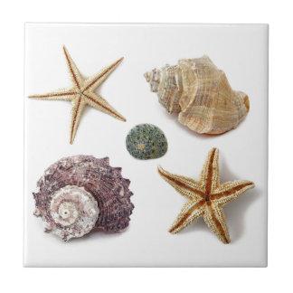 Playa elegante lamentable de los seashells elegant azulejo cuadrado pequeño