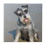 Playa hermosa linda de la foto del perro miniatura tejas  ceramicas