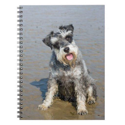 Playa hermosa linda de la foto del perro miniatura libro de apuntes con espiral