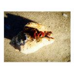 Playa la Florida de Clearwater del cangrejo de erm Postales