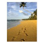 Playa Puerto Rico Tarjeta Postal