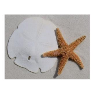 playa sandollar y postal de las estrellas de mar
