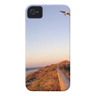 Playa Seagul del halcón iPhone 4 Case-Mate Carcasas